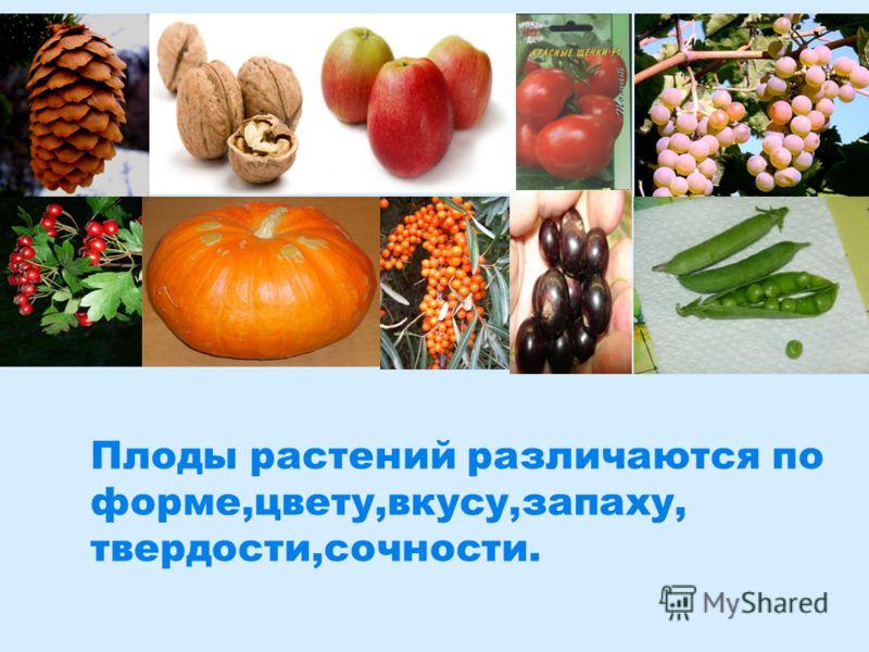Плоды растений различаются по форме,цвету,вкусу,запаху, твердости,сочности.