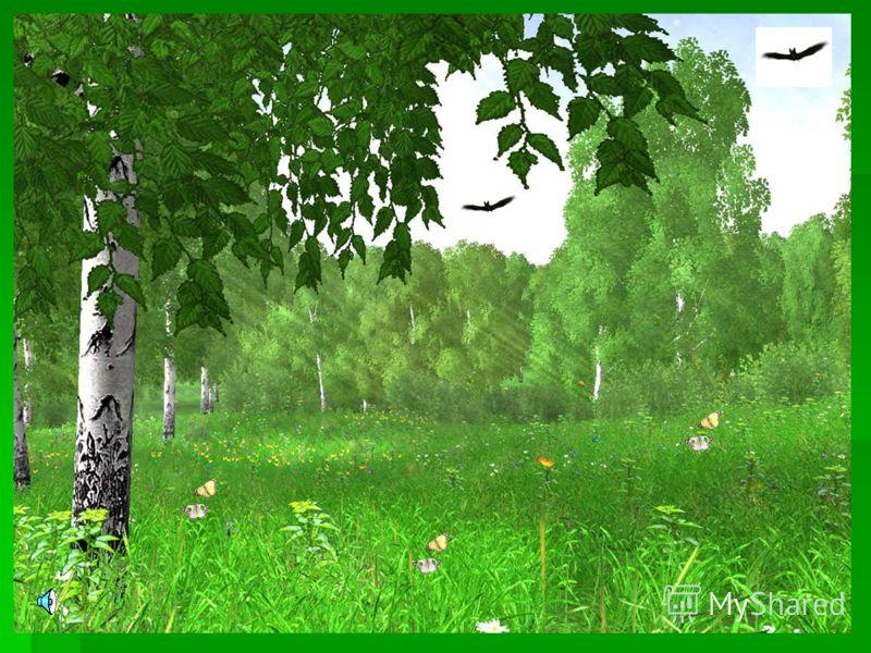 Урок 17. Растения и растительноядные животные. Растения – хищники. Приготовила учитель экологии Васильева Н.А.