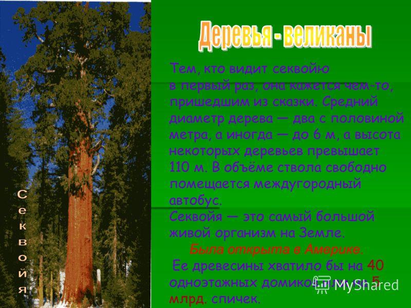 Тем, кто видит секвойю в первый раз, она кажется чем-то, пришедшим из сказки. Средний диаметр дерева два с половиной метра, а иногда до 6 м, а высота некоторых деревьев превышает 110 м. В объёме ствола свободно помещается междугородный автобус. Секво