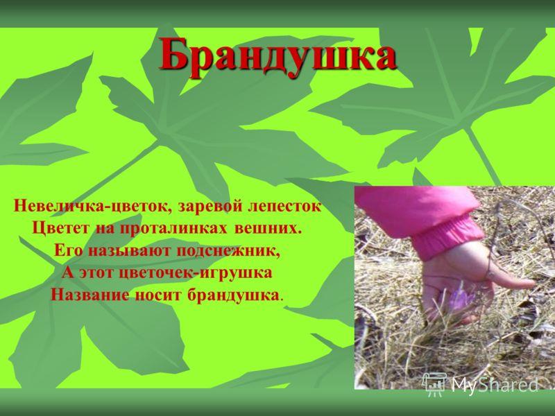 Брандушка Невеличка-цветок, заревой лепесток Цветет на проталинках вешних. Его называют подснежник, А этот цветочек-игрушка Название носит брандушка.
