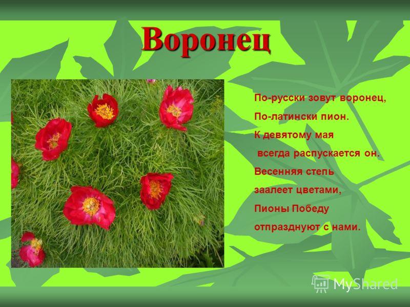 Воронец По-русски зовут воронец, По-латински пион. К девятому мая всегда распускается он. Весенняя степь заалеет цветами, Пионы Победу отпразднуют с нами.