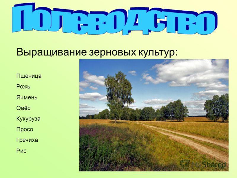 Выращивание зерновых культур: Пшеница Рожь Ячмень Овёс Кукуруза Просо Гречиха Рис
