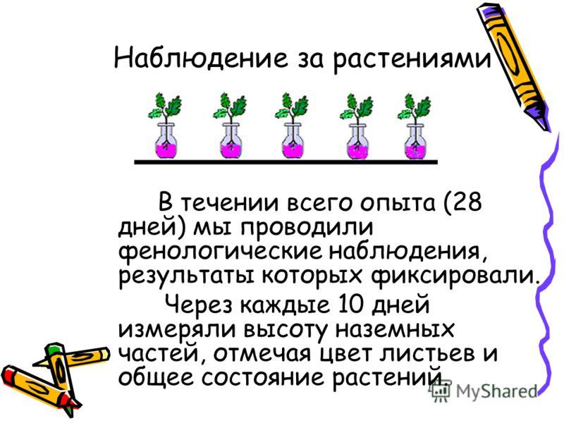 Наблюдение за растениями В