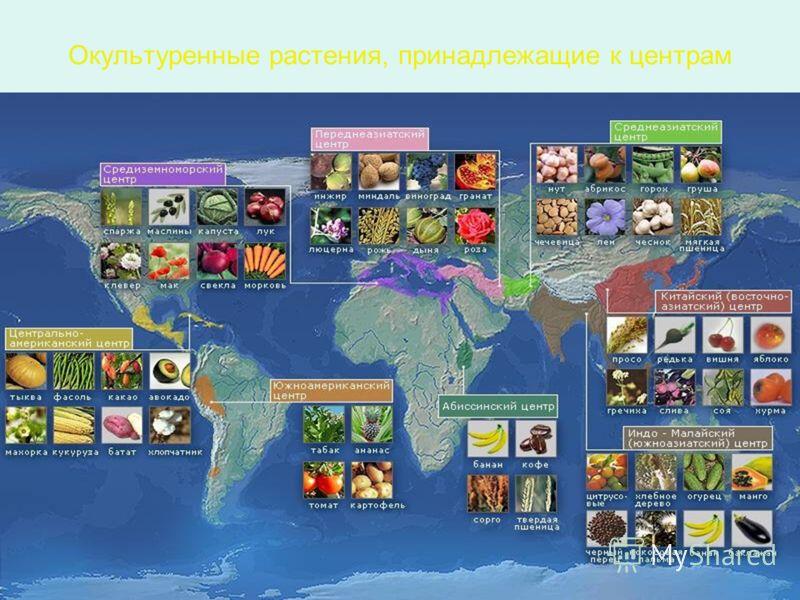Окультуренные растения, принадлежащие к центрам