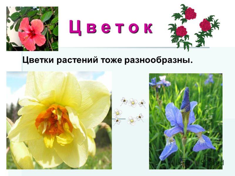 Ц в е т о к Ц в е т о к Цветки растений тоже разнообразны.