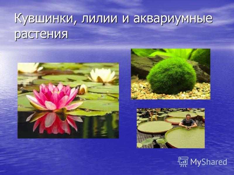 Кувшинки, лилии и аквариумные растения