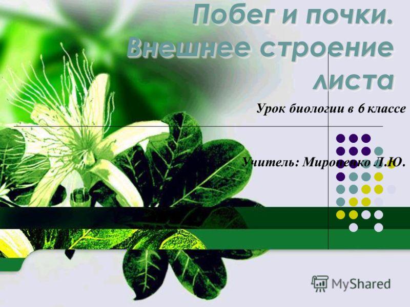 Биология 6 класс доклад про листья