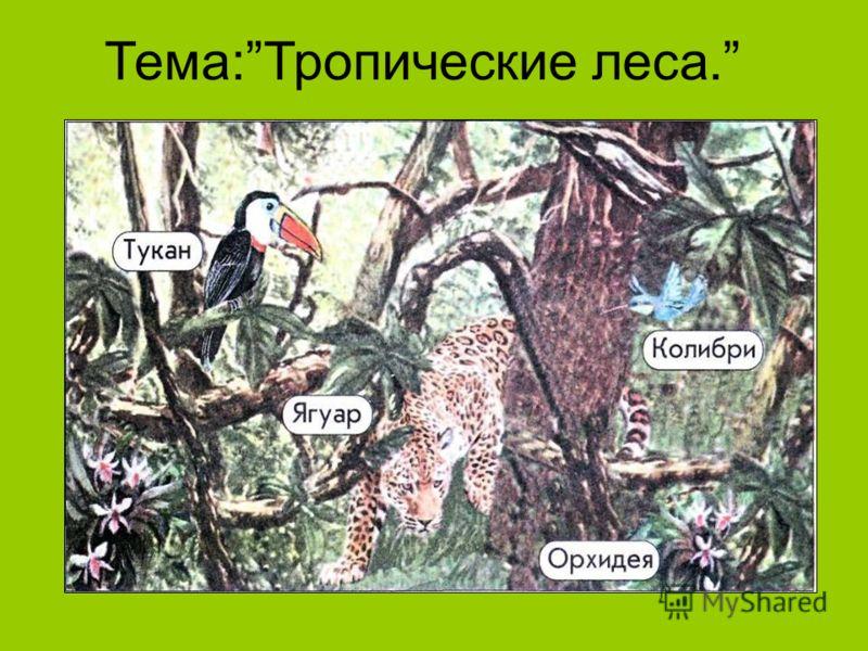 Тема:Тропические леса.