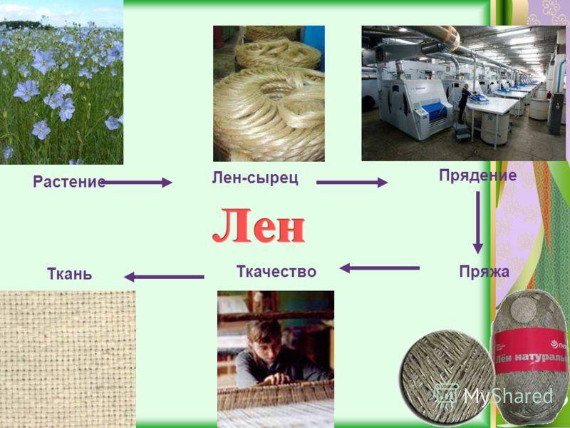 Растение Лен-сырец Прядение ПряжаТкачество Ткань
