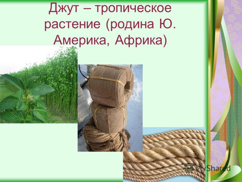 Джут – тропическое растение (родина Ю. Америка, Африка)