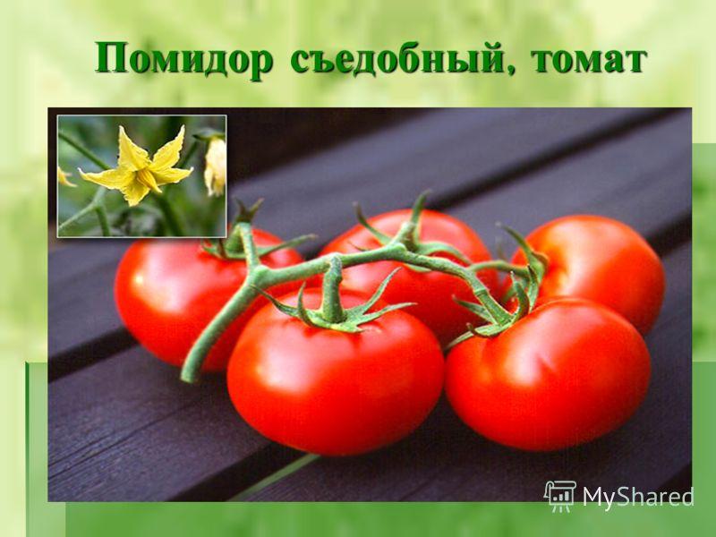Помидор съедобный, томат