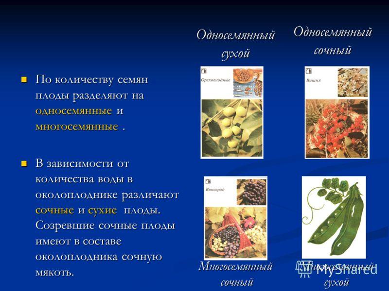 По количеству семян плоды разделяют на односемянные и многосемянные. По количеству семян плоды разделяют на односемянные и многосемянные. В зависимости от количества воды в околоплоднике различают сочные и сухие плоды. Созревшие сочные плоды имеют в
