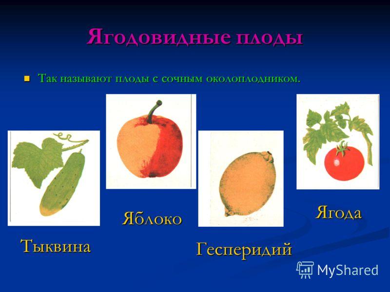 Ягодовидные плоды Так называют плоды с сочным околоплодником. Так называют плоды с сочным околоплодником. Тыквина Яблоко Гесперидий Ягода