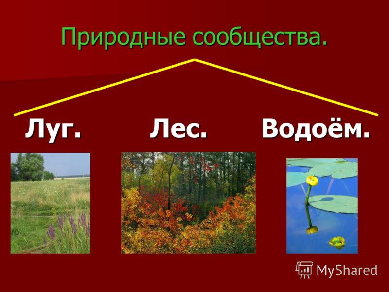 Что где растёт, кто где живёт…