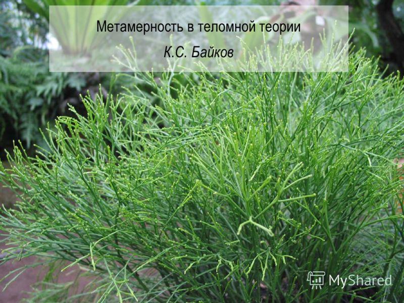 Метамерность в теломной теории К.С. Байков