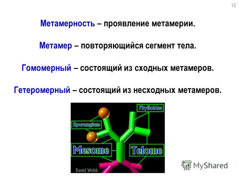 Метамерность – проявление метамерии. Метамер – повторяющийся сегмент тела. Гомомерный – состоящий из сходных метамеров. Гетеромерный – состоящий из несходных метамеров. 10
