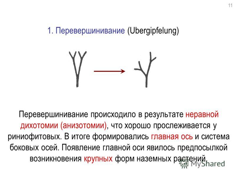 1. Перевершинивание (Ubergipfelung) Перевершинивание происходило в результате неравной дихотомии (анизотомии), что хорошо прослеживается у риниофитовых. В итоге формировались главная ось и система боковых осей. Появление главной оси явилось предпосыл