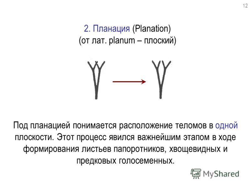 2. Планация (Planation) (от лат. planum – плоский) Под планацией понимается расположение теломов в одной плоскости. Этот процесс явился важнейшим этапом в ходе формирования листьев папоротников, хвощевидных и предковых голосеменных. 12