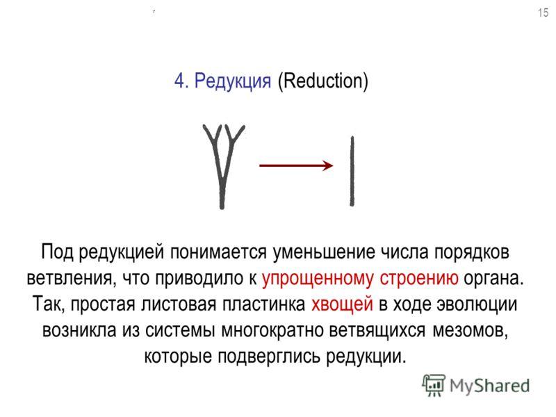 Под редукцией понимается уменьшение числа порядков ветвления, что приводило к упрощенному строению органа. Так, простая листовая пластинка хвощей в ходе эволюции возникла из системы многократно ветвящихся мезомов, которые подверглись редукции. 4. Ред
