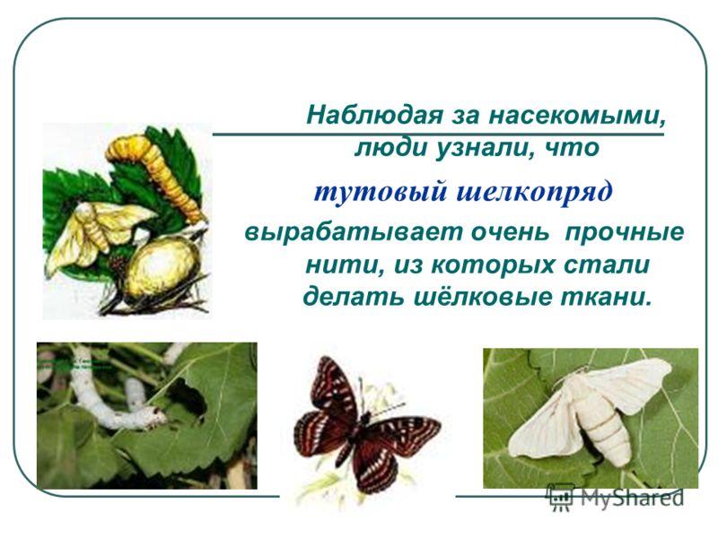Наблюдая за насекомыми, люди узнали, что тутовый шелкопряд вырабатывает очень прочные нити, из которых стали делать шёлковые ткани.