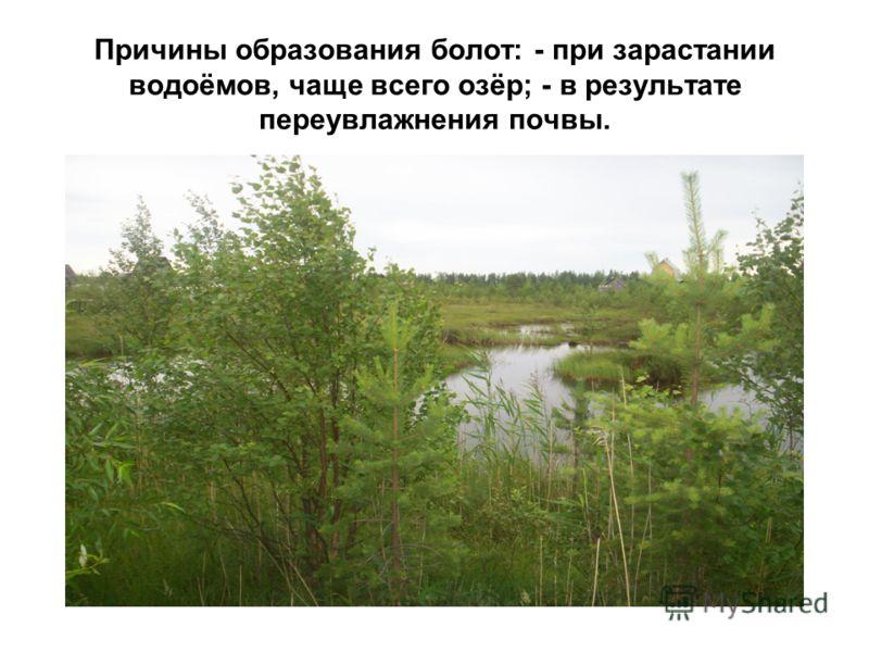 Причины образования болот: - при зарастании водоёмов, чаще всего озёр; - в результате переувлажнения почвы.