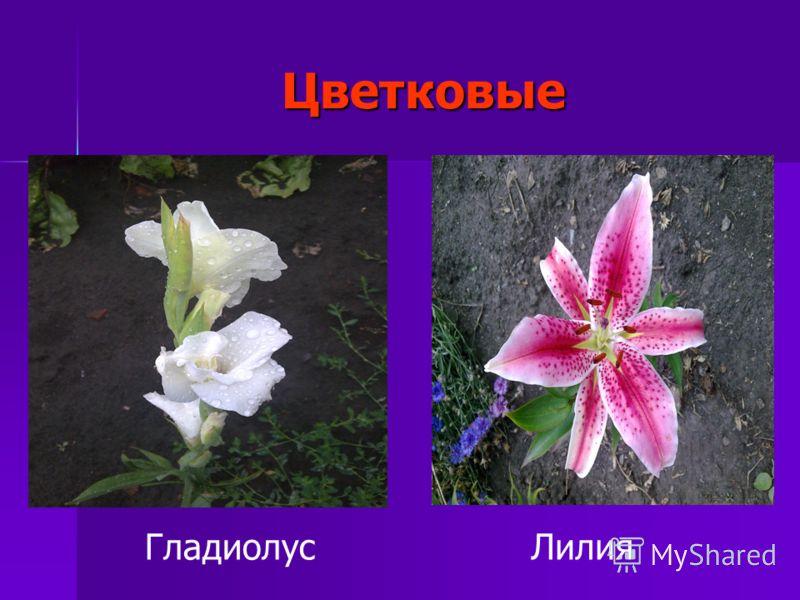 Цветковые ЛилияГладиолус