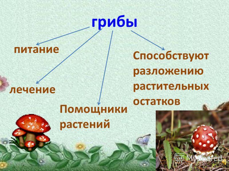 грибы питание лечение Помощники растений Способствуют разложению растительных остатков
