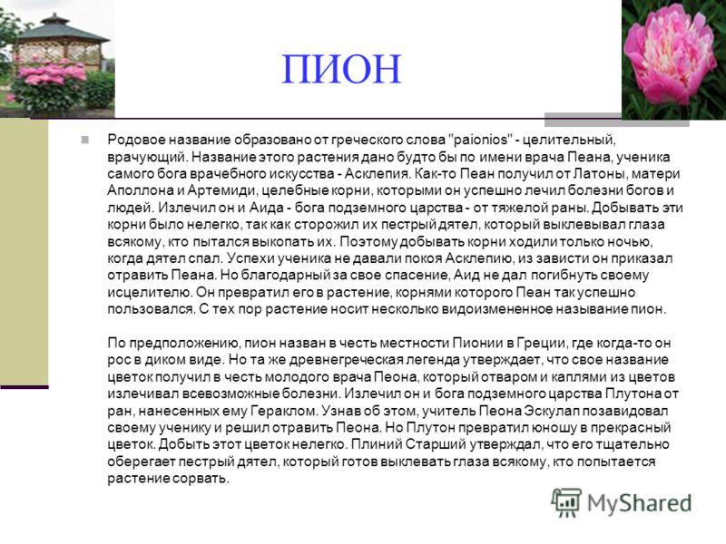 ПИОН Родовое название образовано от греческого слова