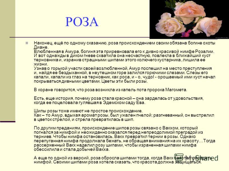 РОЗА Наконец, ещё по одному сказанию, роза происхождением своим обязана богине охоты Диане. Влюбленная в Амура, богиня эта приревновала его к дивно кр