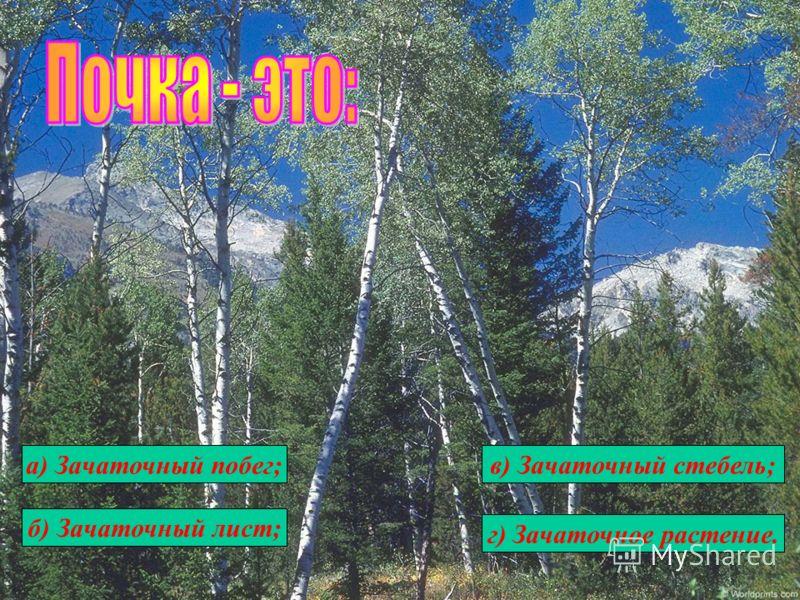 а) Зачаточный побег; б) Зачаточный лист; в) Зачаточный стебель; г) Зачаточное растение.