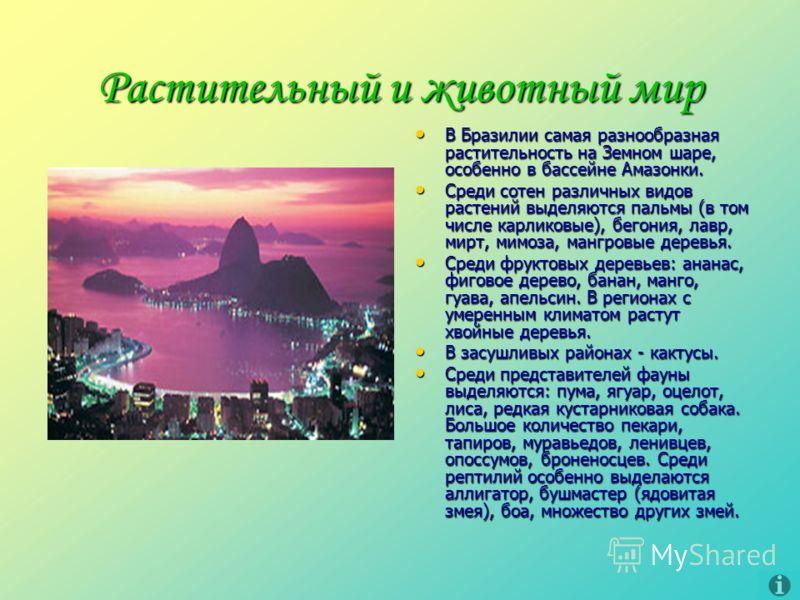 Растительный и животный мир В Бразилии самая разнообразная растительность на Земном шаре, особенно в бассейне Амазонки. В Бразилии самая разнообразная растительность на Земном шаре, особенно в бассейне Амазонки. Среди сотен различных видов растений в