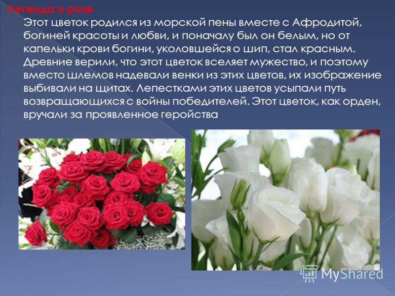 Легенда о розе Этот цветок родился из морской пены вместе с Афродитой, богиней красоты и любви, и поначалу был он белым, но от капельки крови богини, уколовшейся о шип, стал красным. Древние верили, что этот цветок вселяет мужество, и поэтому вместо