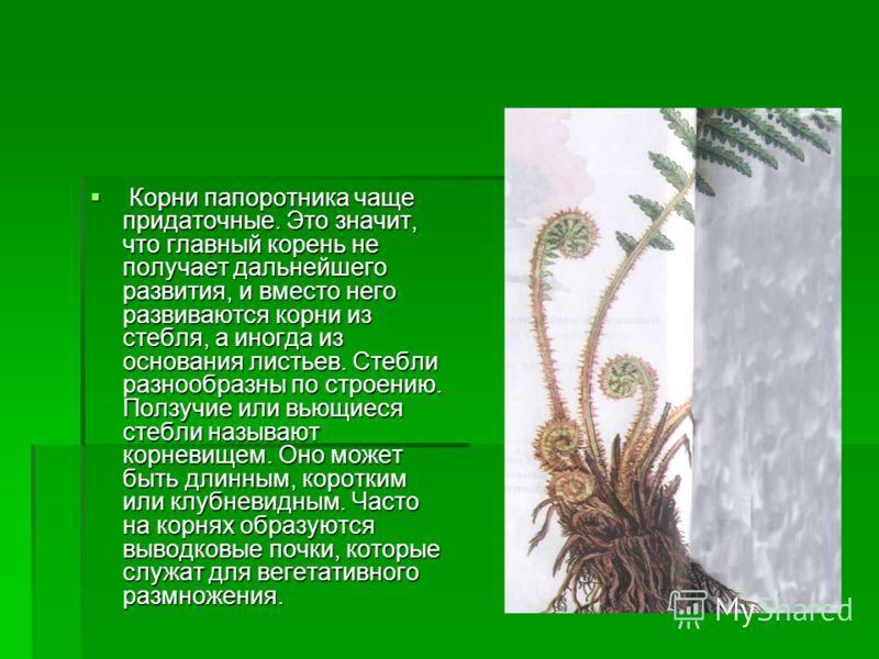 Отдел Папоротникообразные. Папоротник, отдел высших бессемянных растений. Это травянистые или древовидные наземные и водные растения. Все они имеют корни, листья и стебли. В стеблях появляется специализированная проводящая ткань, состоящая из сосудов