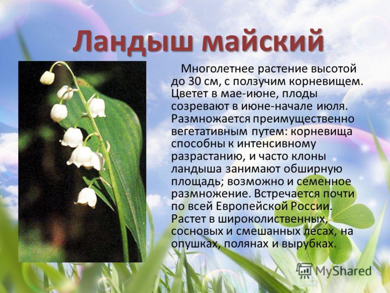 Ландыш майский Многолетнее растение высотой до 30 см, с ползучим корневищем. Цветет в мае-июне, плоды созревают в июне-начале июля. Размножается преимущественно вегетативным путем: корневища способны к интенсивному разрастанию, и часто клоны ландыша