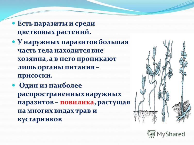 паразиты в тканях человека симптомы