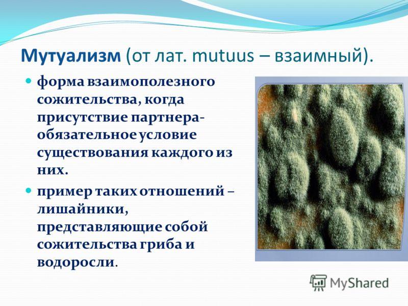 Мутуализм (от лат. mutuus – взаимный). форма взаимополезного сожительства, когда присутствие партнера- обязательное условие существования каждого из них. пример таких отношений – лишайники, представляющие собой сожительства гриба и водоросли.