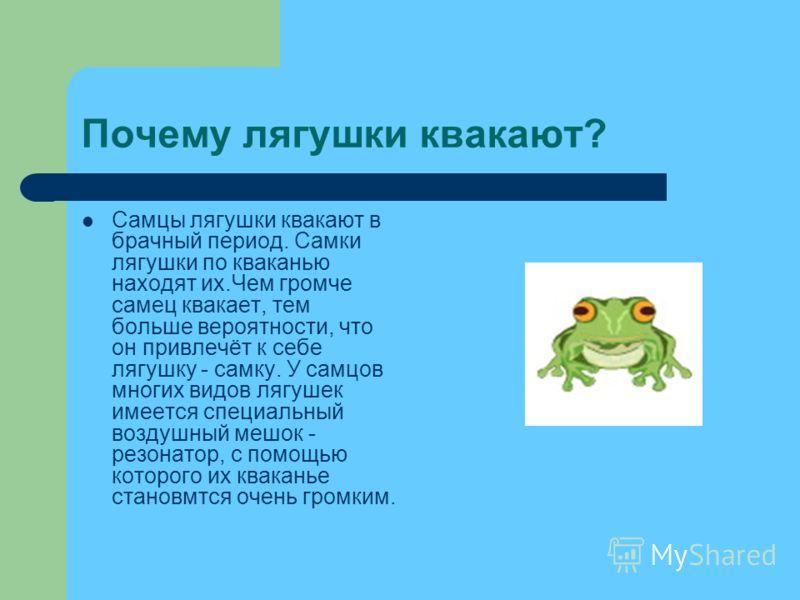 Почему лягушки квакают? Самцы лягушки квакают в брачный период. Самки лягушки по кваканью находят их.Чем громче самец квакает, тем больше вероятности, что он привлечёт к себе лягушку - самку. У самцов многих видов лягушек имеется специальный воздушны