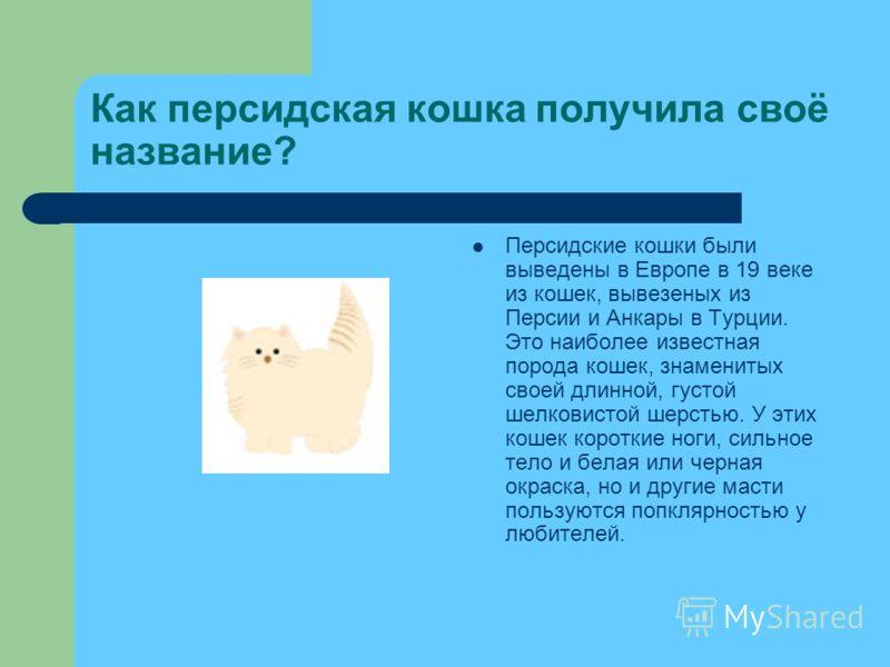 Как персидская кошка получила своё название? Персидские кошки были выведены в Европе в 19 веке из кошек, вывезеных из Персии и Анкары в Турции. Это наиболее известная порода кошек, знаменитых своей длинной, густой шелковистой шерстью. У этих кошек ко