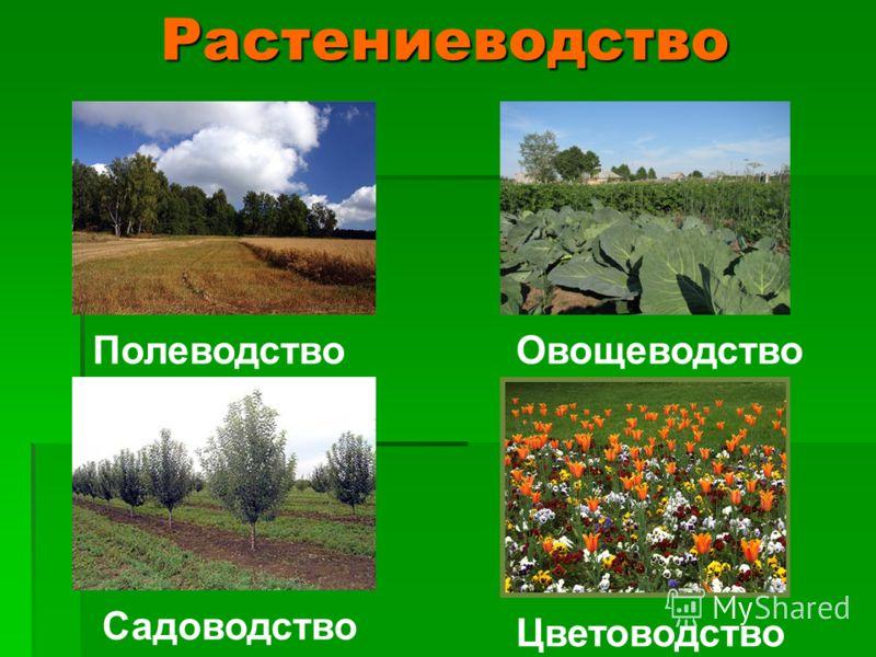 Растениеводство Садоводство Цветоводство ПолеводствоОвощеводство
