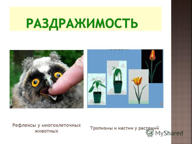Рефлексы у многоклеточных животных Тропизмы и настии у растений