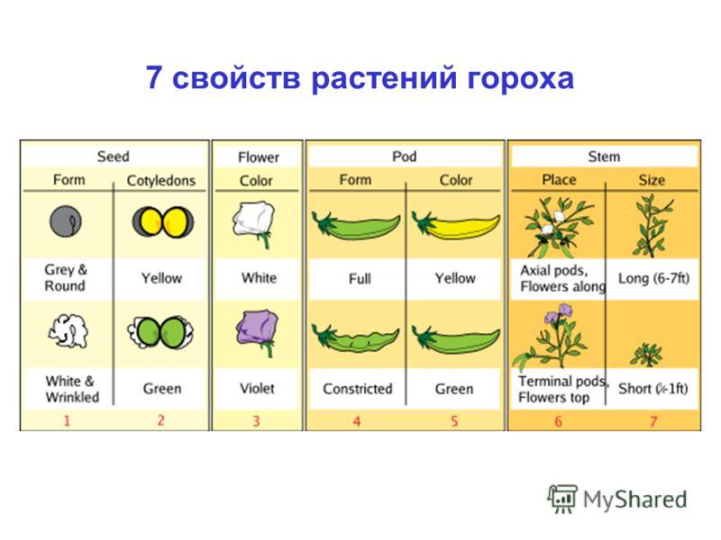 7 свойств растений гороха