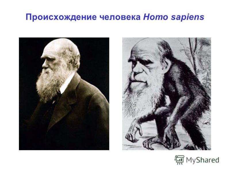 Происхождение человека Homo sapiens