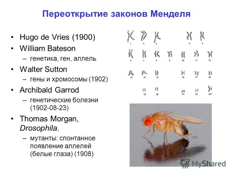 Переоткрытие законов Менделя Hugo de Vries (1900) William Bateson –генетика, ген, аллель Walter Sutton –гены и хромосомы (1902) Archibald Garrod –генетические болезни (1902-08-23) Thomas Morgan, Drosophila. –мутанты: спонтанное появление аллелей (бел