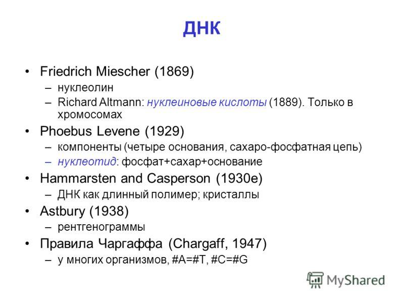 ДНК Friedrich Miescher (1869) –нуклеолин –Richard Altmann: нуклеиновые кислоты (1889). Только в хромосомах Phoebus Levene (1929) –компоненты (четыре основания, сахаро-фосфатная цепь) –нуклеотид: фосфат+сахар+основание Hammarsten and Casperson (1930е)
