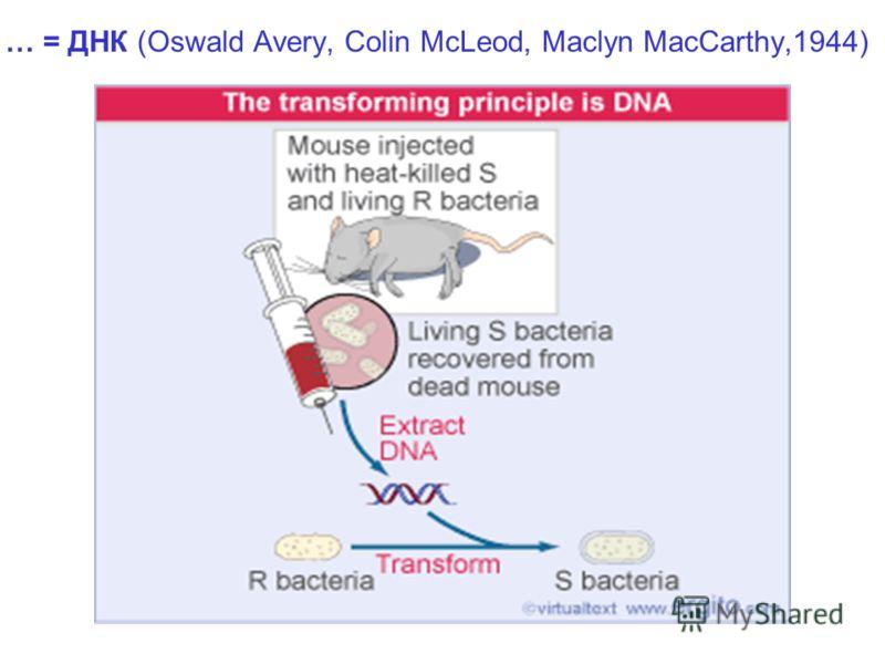 … = ДНК (Oswald Avery, Colin McLeod, Maclyn MacCarthy,1944)