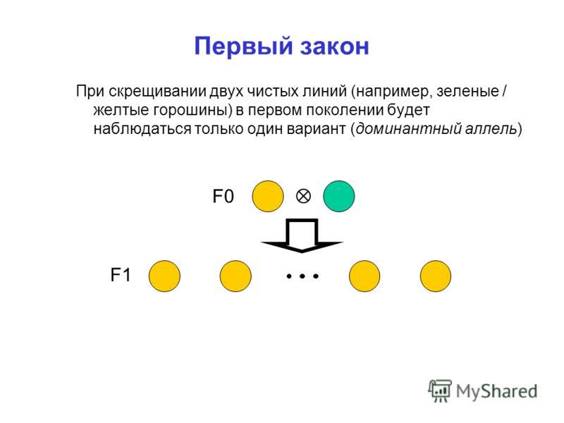 Первый закон При скрещивании двух чистых линий (например, зеленые / желтые горошины) в первом поколении будет наблюдаться только один вариант (доминантный аллель) F0 F1