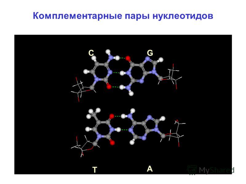 Комплементарные пары нуклеотидов С Т G A