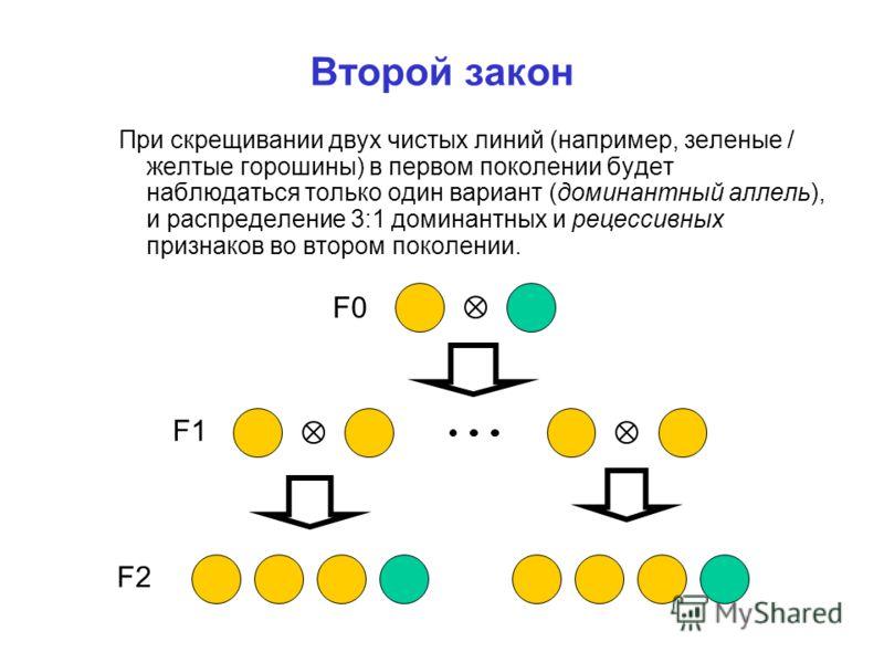 Второй закон При скрещивании двух чистых линий (например, зеленые / желтые горошины) в первом поколении будет наблюдаться только один вариант (доминантный аллель), и распределение 3:1 доминантных и рецессивных признаков во втором поколении. F0 F1 F2