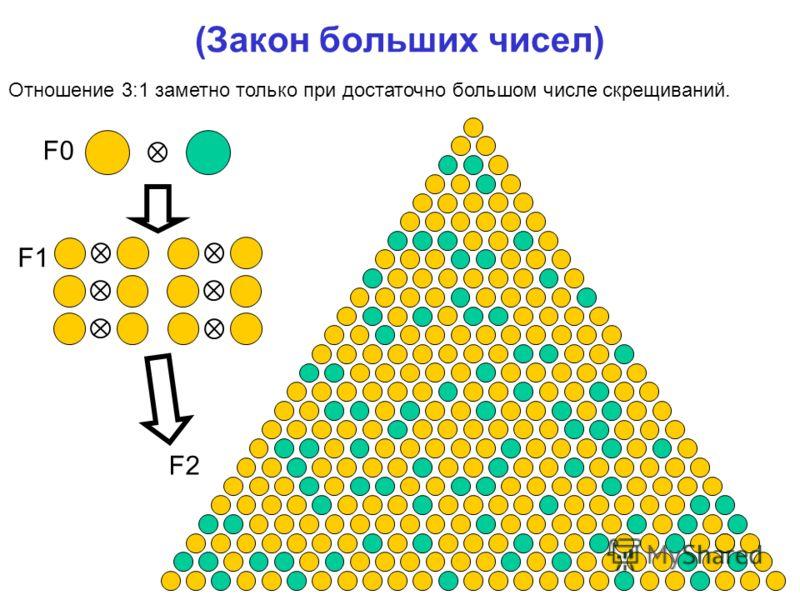 (Закон больших чисел) F0 F1 F2 Отношение 3:1 заметно только при достаточно большом числе скрещиваний.