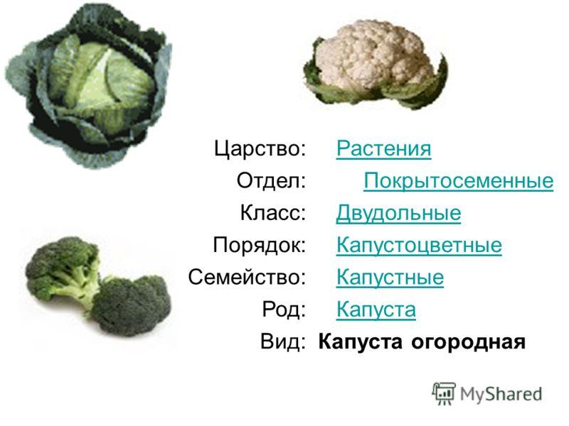 Царство: Растения Отдел:Покрытосеменные Класс: Двудольные Порядок: Капустоцветные Семейство: Капустные Род: Капуста Вид:Капуста огородная